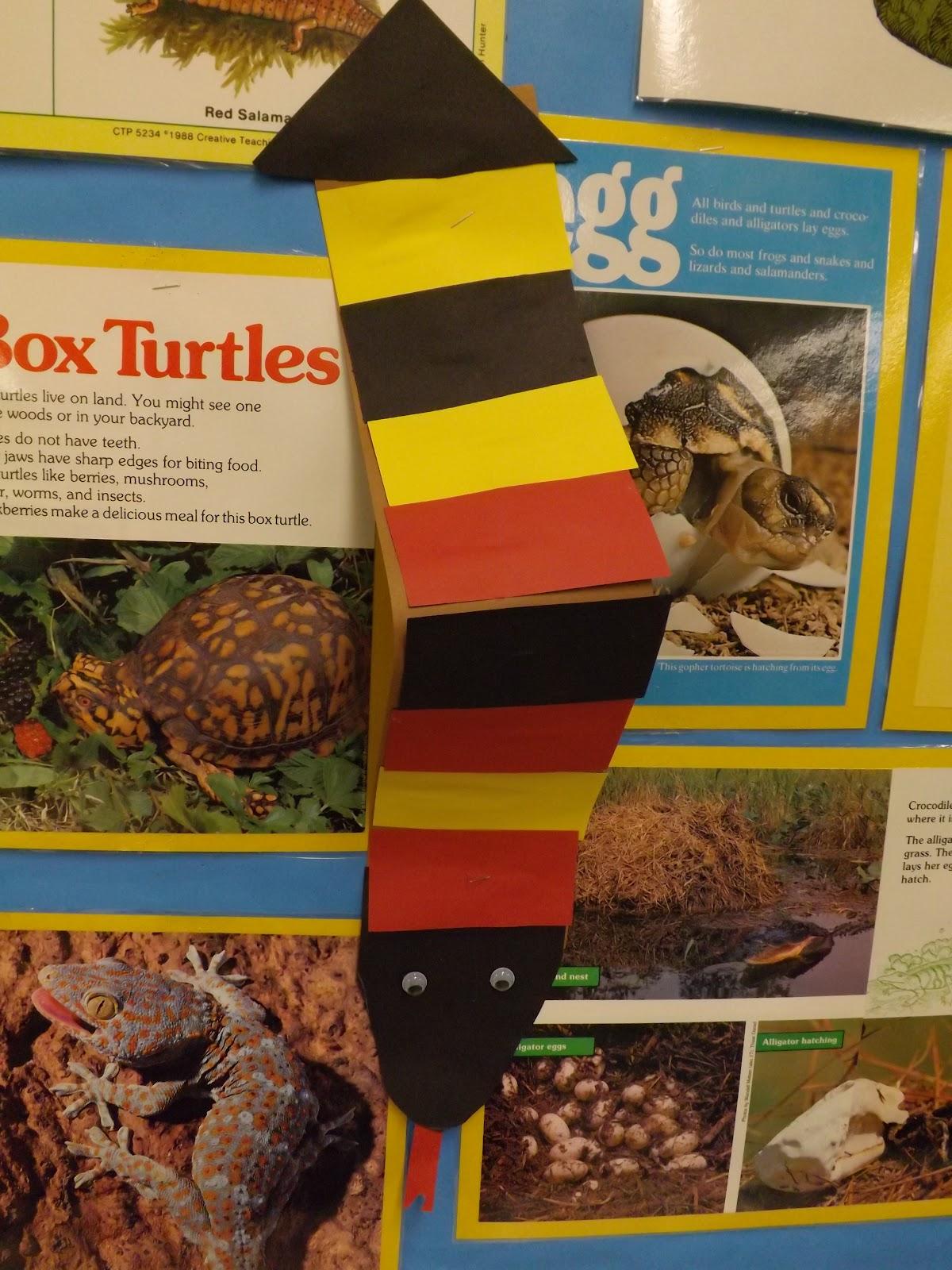 venn diagram of reptiles and amphibians grassland food web mrs vento 39s kindergarten