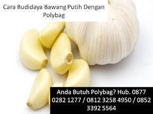 Cara Budidaya Bawang Putih Dengan Polybag