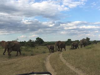Botswana, ratsastussafari, riitta reissaa, horsexplore, ratsastusmatkailu