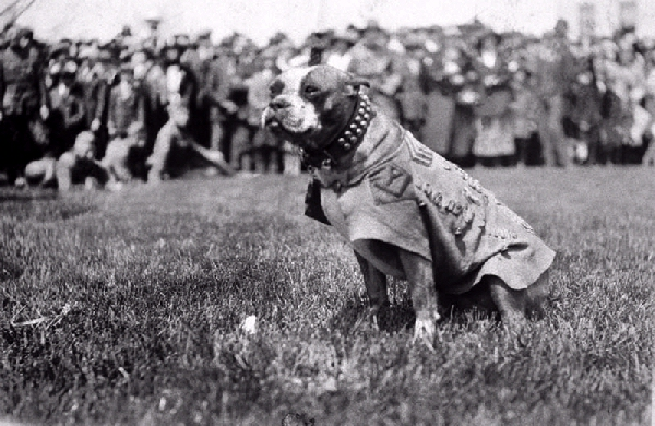 Sergeant-Stubby-War-Dog-Hero