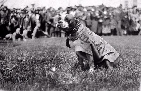 Sergeant-Stubby-War-Dog-Hero