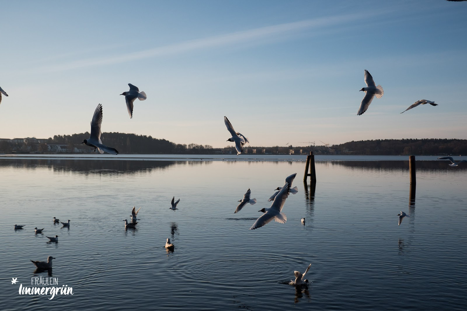 Müritz Nationalpark – Möwen über der Binnenmüritz