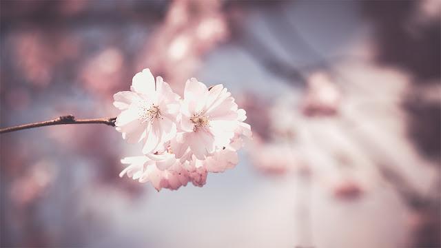 http://www.croquelesmots.fr/2017/04/mes-favoris-du-moment-printemps-2017.html