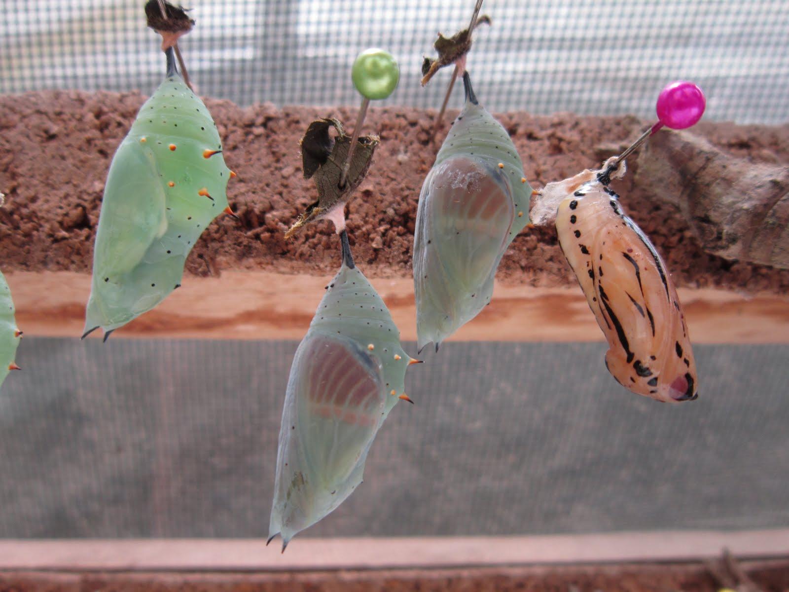fliegen fangen mit zuckerwasser