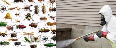 شركة مكافحه النمل الابيض في الرياض