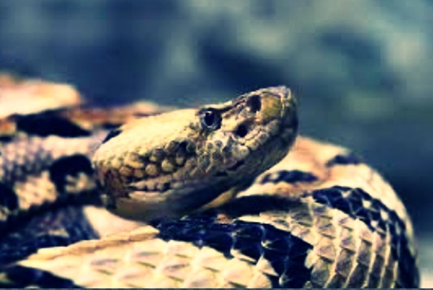 Ciri-ciri ular