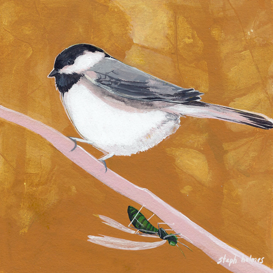 Black Capped Chickadee bird