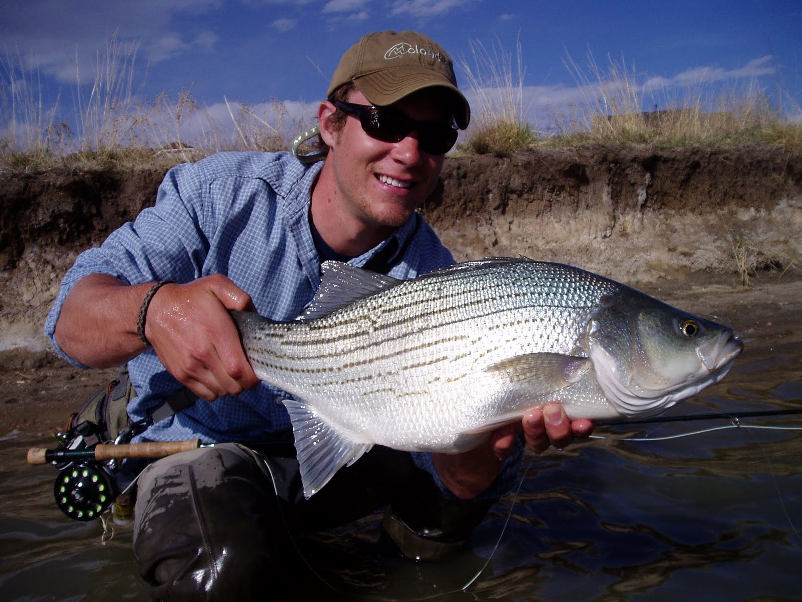 00a78e0b9ff Colorado Fly Fishing Reports  A comparative analysis  IF FISH WERE DRUGS
