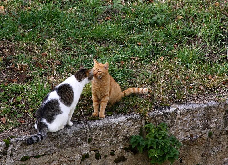 Rencontre et chat