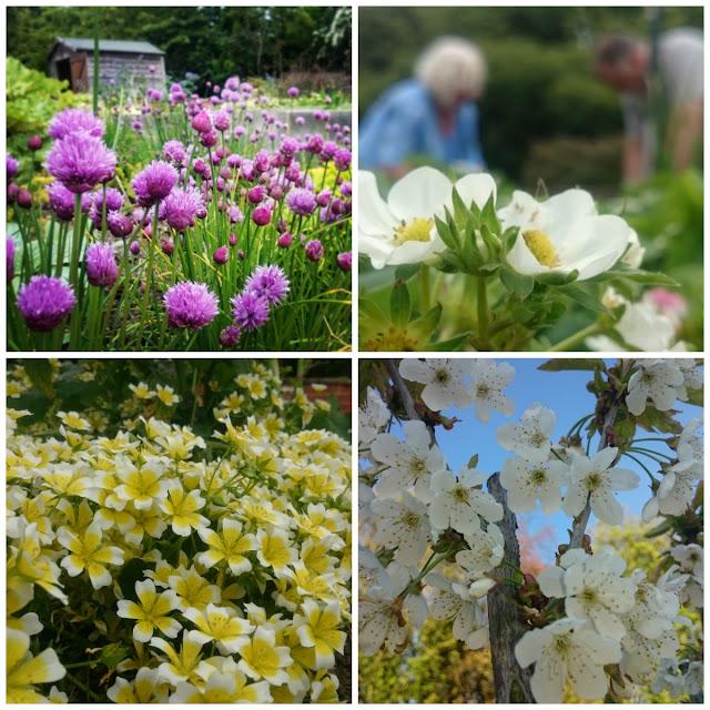 Blooming PCP Garden, pioneering care garden