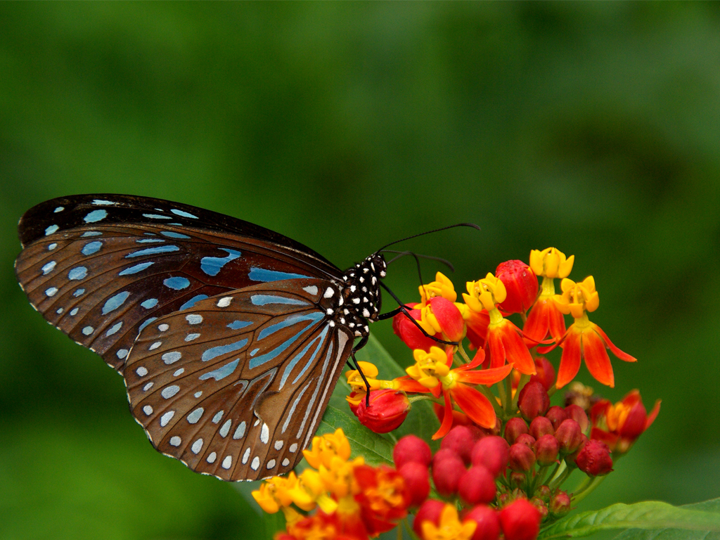 hd wallpapers : best HD Butterflies And Flowers wallpapers - photo#11