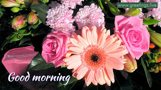 Multi-flowers-morning-greetings-Greetings-Live