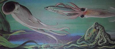 Ilustración de un pulpo utilizando su sistema de propulsión de chorro, otro mimetizado sobre las rocas y un calamar devorando un arenque