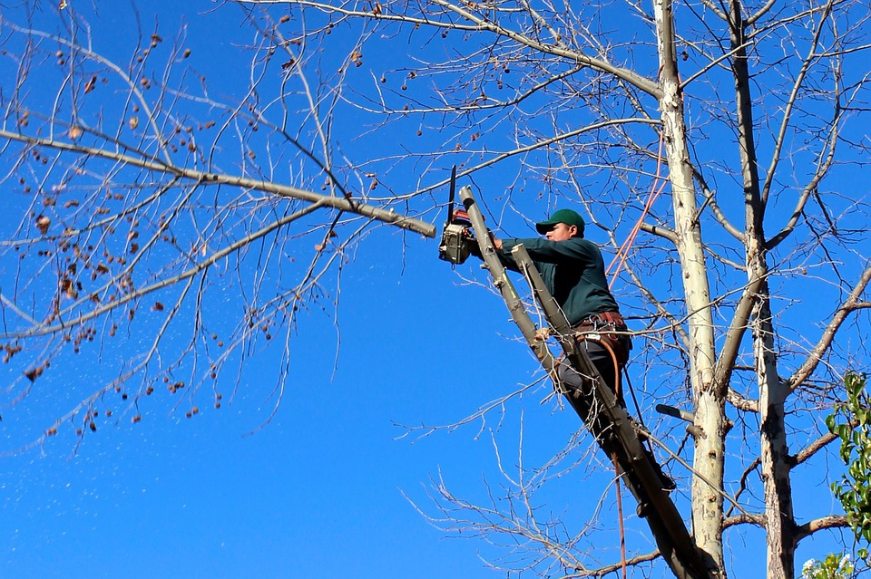 Tree Services in Jacksonville