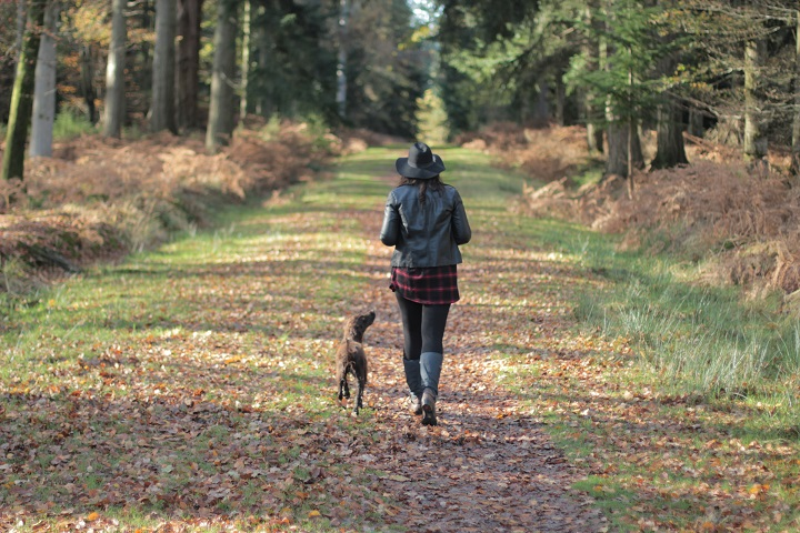 3 Dog Friendly Day Trips