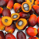 Image for Customized Palm Oil Soap