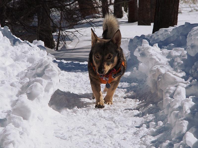 Week end à la neige avec un chien 12