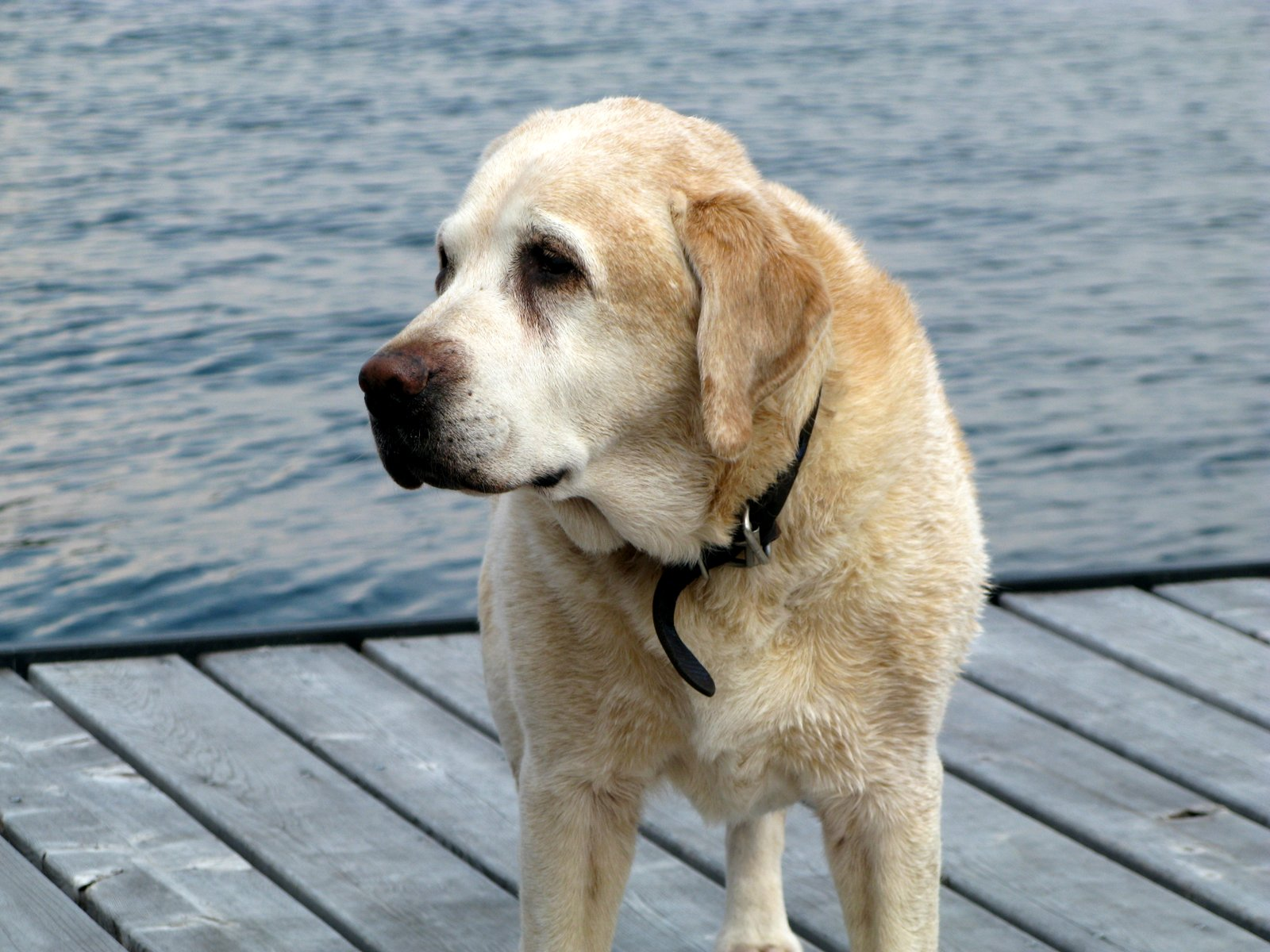 salt water new england guest post reposted life measured out guest post reposted life measured out in labradors an essay by michael rowe