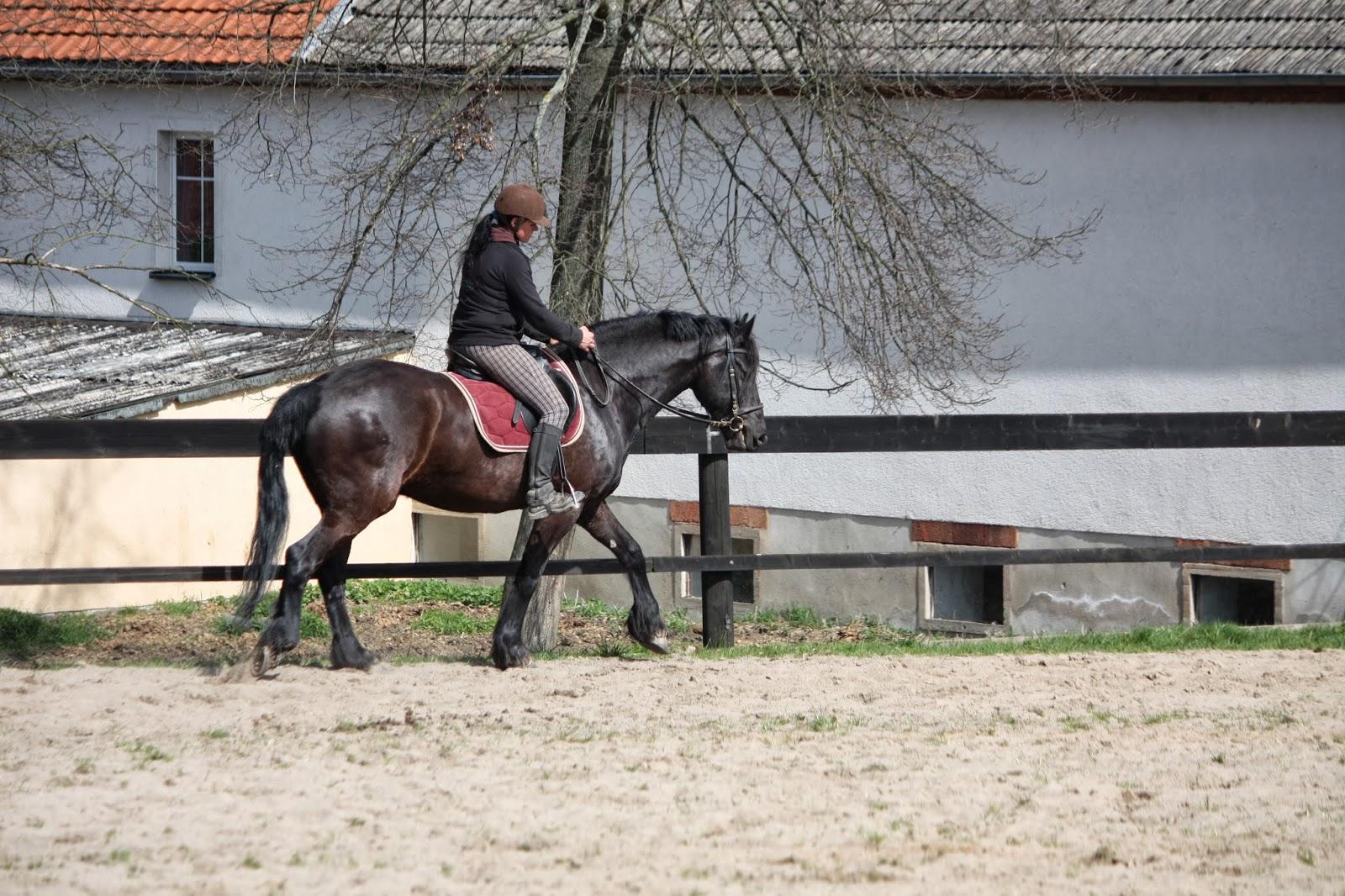 rückschmerzen beim pferd