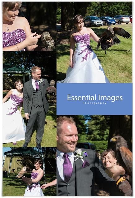 Birds of prey at a wedding