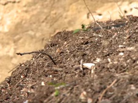 Video de las jardineras del Jardín Botánico de Valencia explicando cómo hacer un buen compost