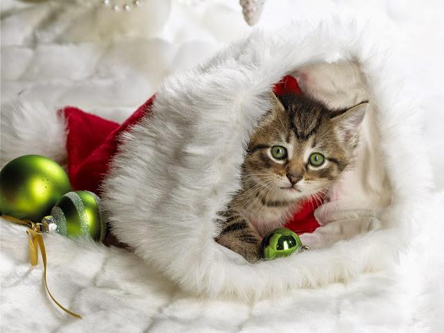 Kat met kerstmuts en ballen