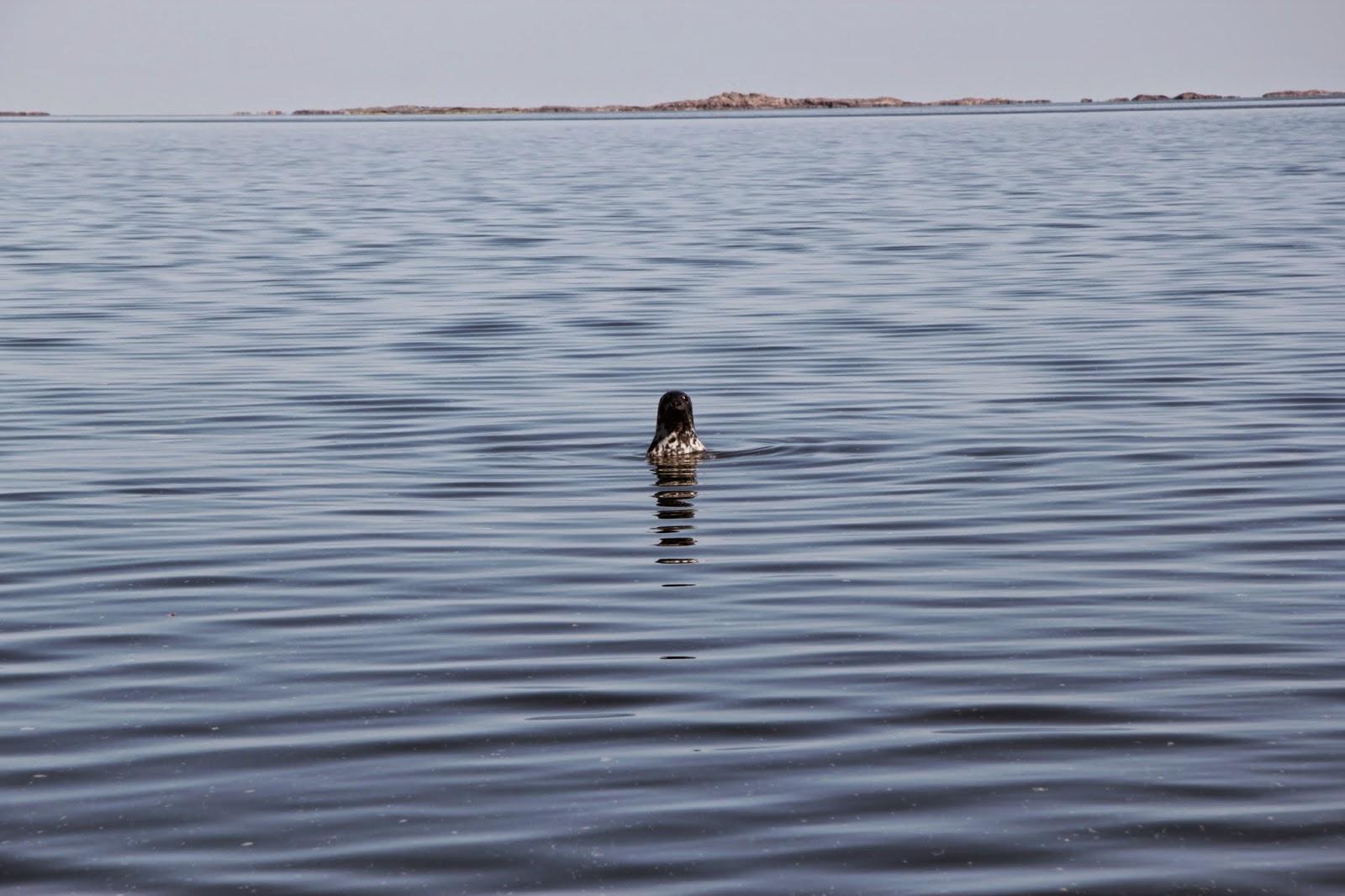 rädda östersjön hur