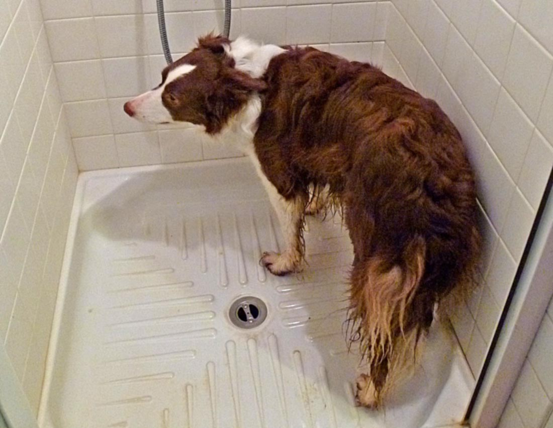 Living The Life In Saint Aignan The Dog Shower