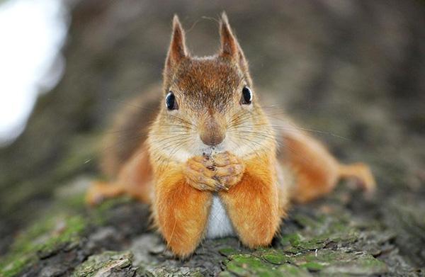 Xả stress cùng chùm ảnh động vật có dáng chụp hình đi vào huyền thoại