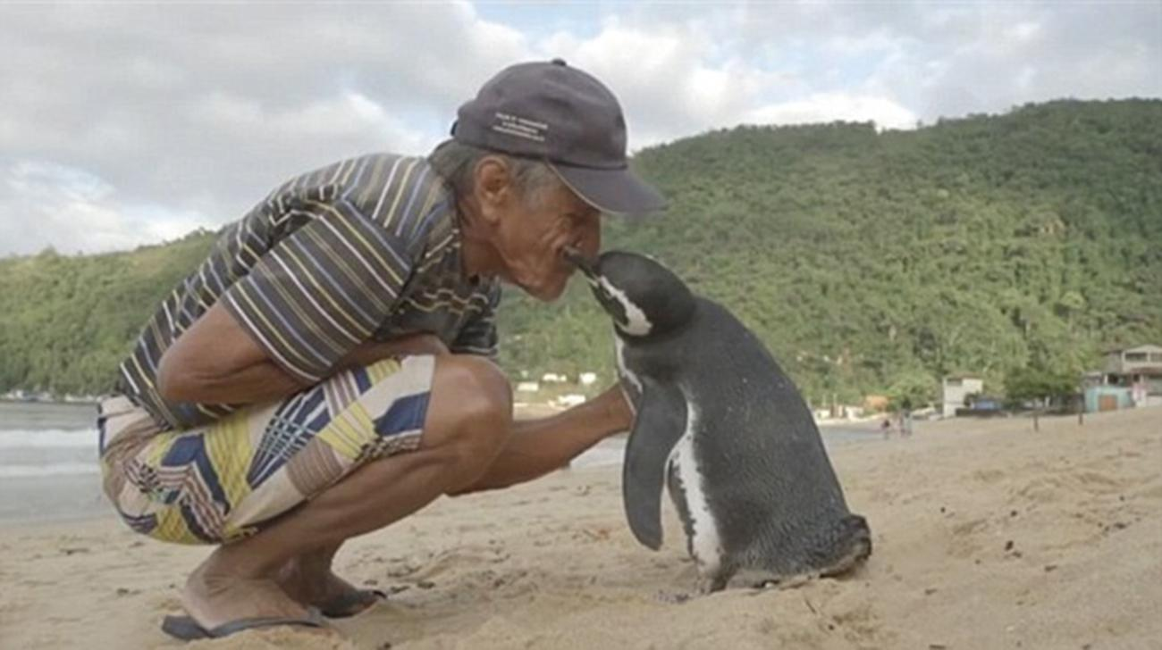 Heartwarming Story of a Penguin Who Swims 5,000 Miles Every Year to See the Man Who Rescued Him