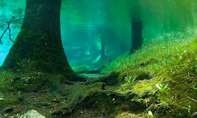 underwater forest - submerged forest