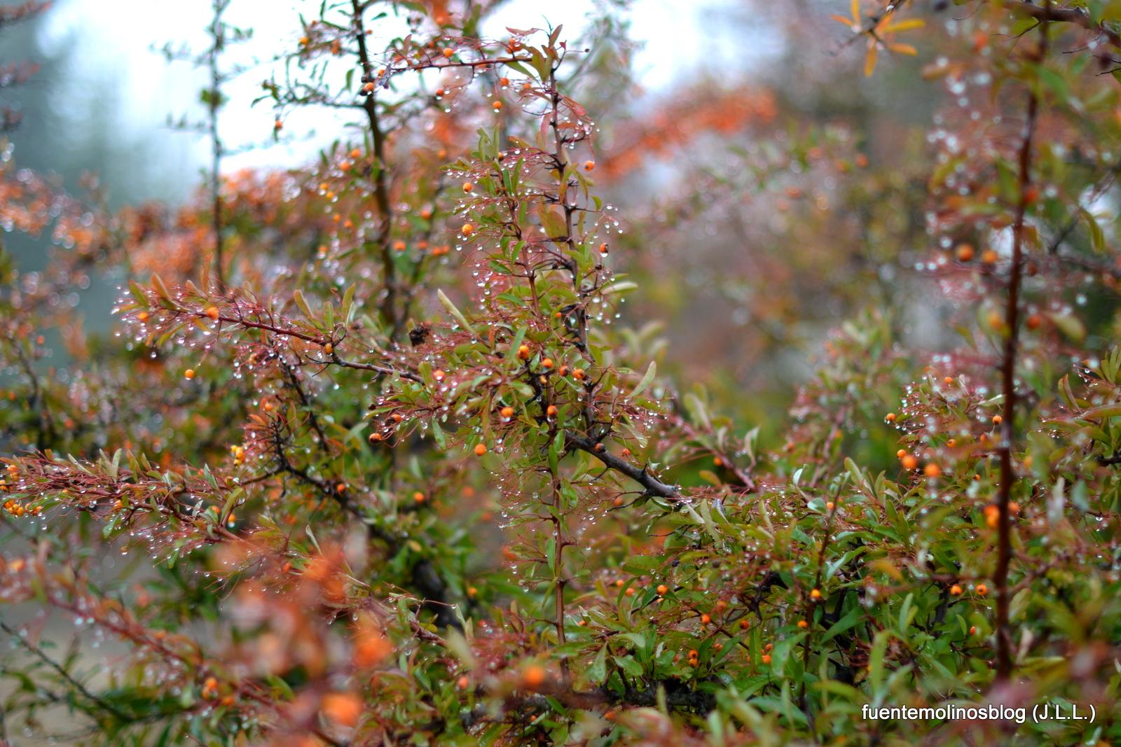 fuentemolinosblog: Notas de color de invierno