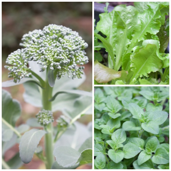 Harvesting the Winter Garden- www.gildedbloom.com #gardening