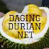 Distributor Daging Durian Medan di Seluma