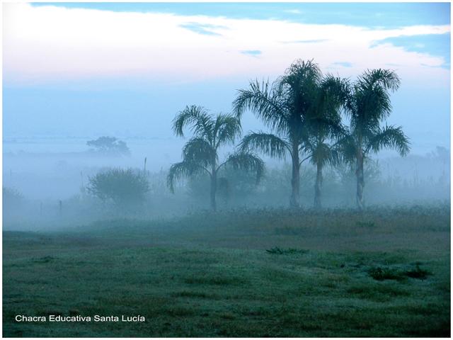 Las pindó entre la bruma - Chacra Educativa Santa Lucía