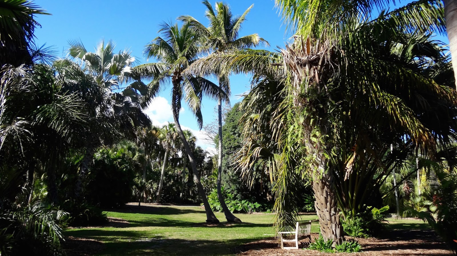 The bayou botanist going tropical fairchild tropical - Fairchild tropical botanic garden ...