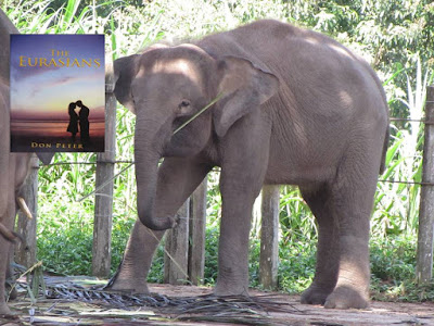 PYGMY: The Exotic Elephant from Borneo