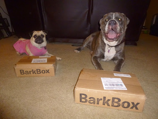 Barkbox Review April 2014 - Emma's Box