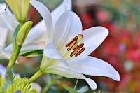 vangelo fiore misericordia giustizia dio fede amore buona notizia