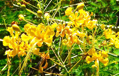 flowers, paya bay resort, #payabay, #payabayresort, flora, roatan, beauty, nature,