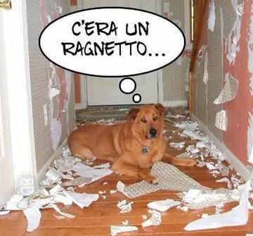 cane che nega i suoi errori