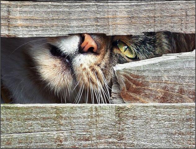 CATS*GATS*GATOS: Gatos Traviesos