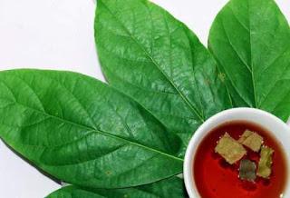 ¿Conoces el té de hojas de aguacate? No te quedes sin conocerlo