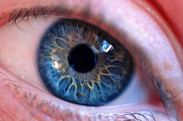 Brócolis e a saúde dos seus olhos