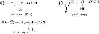 asam amino mengandung cincin aromatik