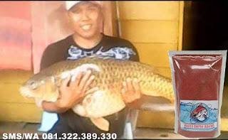 Umpan Pelet Serbuk Yang Gacor Untuk Ikan Mas