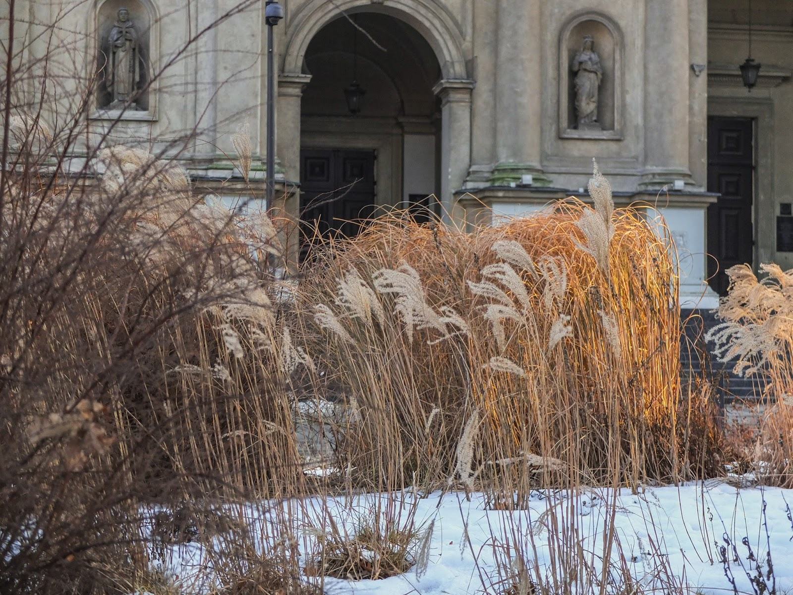 Tall grasses at sunset outside a church in Warsaw.