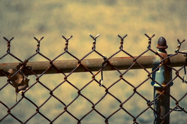 Rusty Chainlink Fence with Fall Leaf