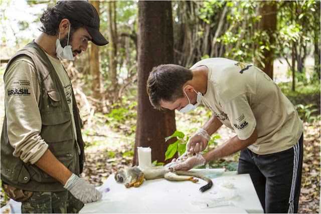 sedativo-captura-animais-silvestres