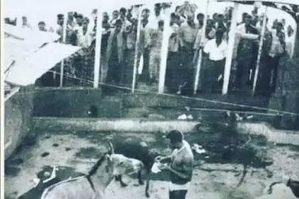 Legendary! See This Fela Throwback Pic,Feeding his Donkey Named Yakubu Gowon